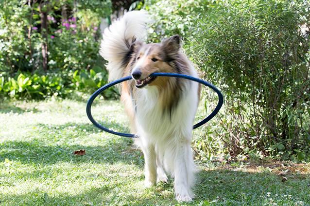Hooping-Spaß für Groß und Klein