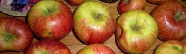 Einführung in die Grundlagen der ayurvedischen Ernährung